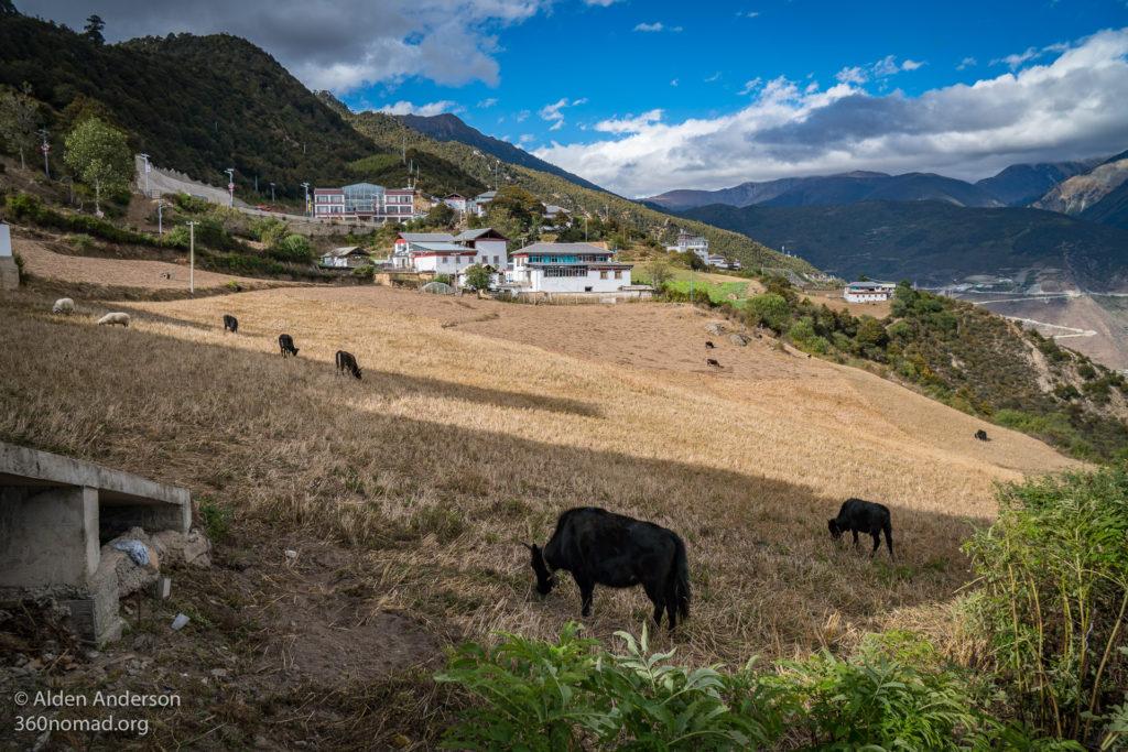 Pasture next to the Feilai Monastery
