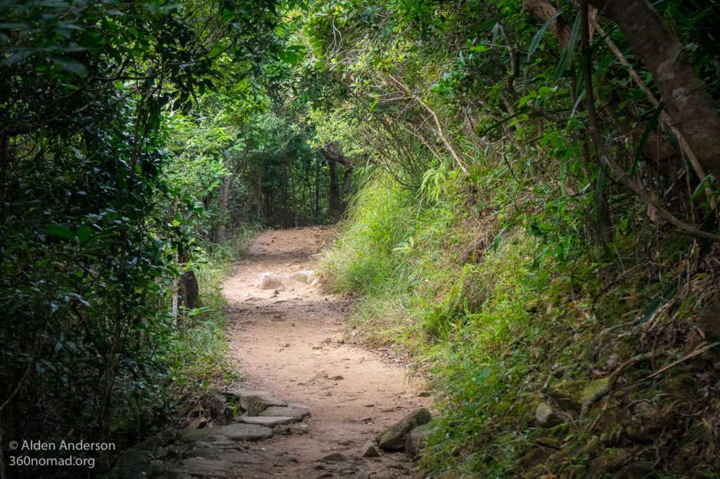 Easy Trail through the forest to Tai Tam Gap