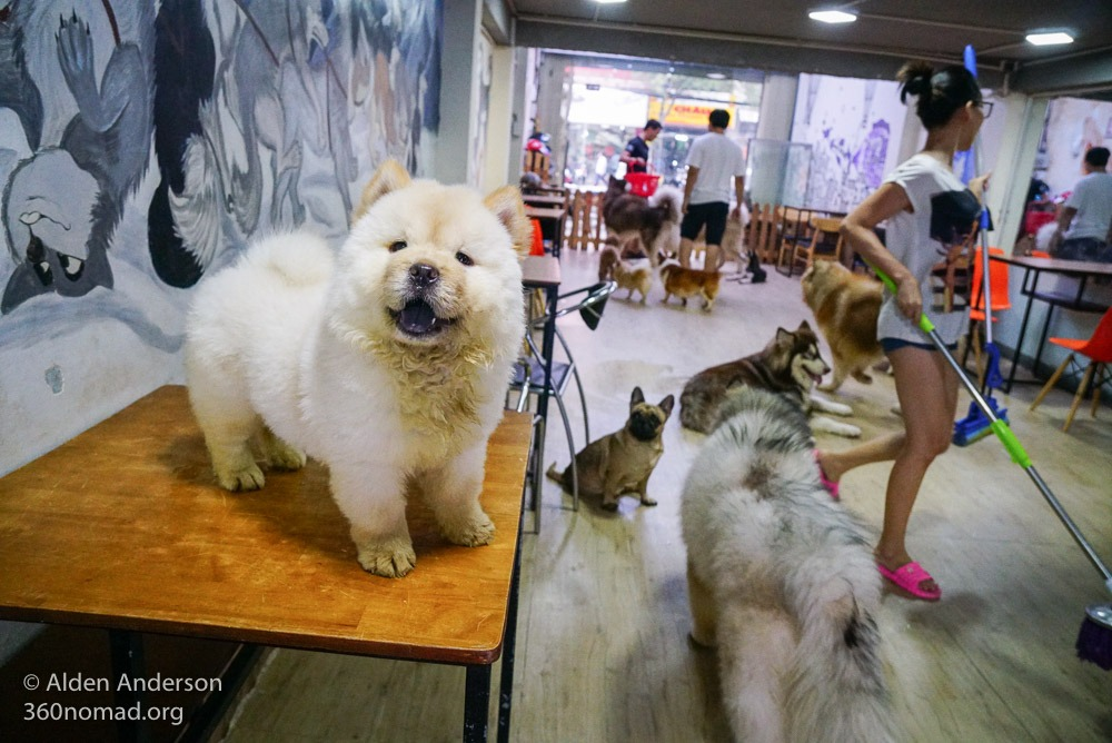 Yuna Alaska Coffee- Dog Cafe - Ho Chi Minh City