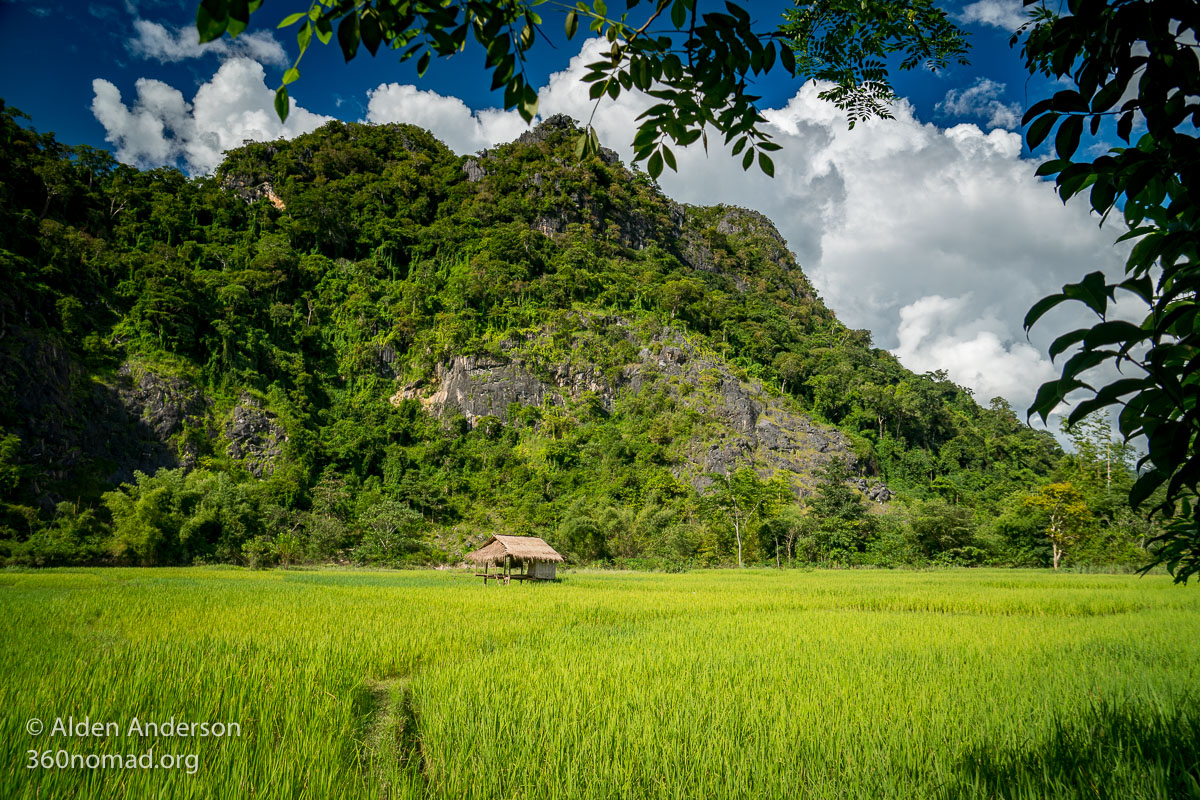Rice fields and karst